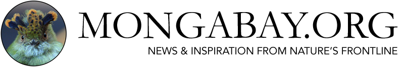 Mongabay seeks story proposals on agroforestry